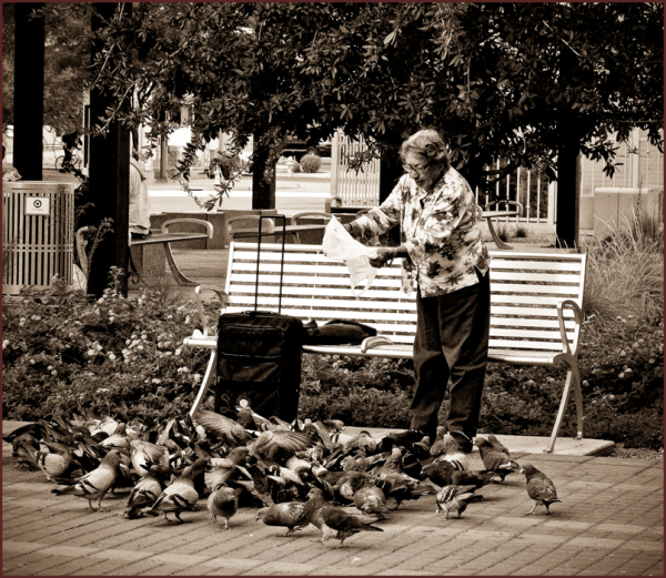 Woman feeding birds in city