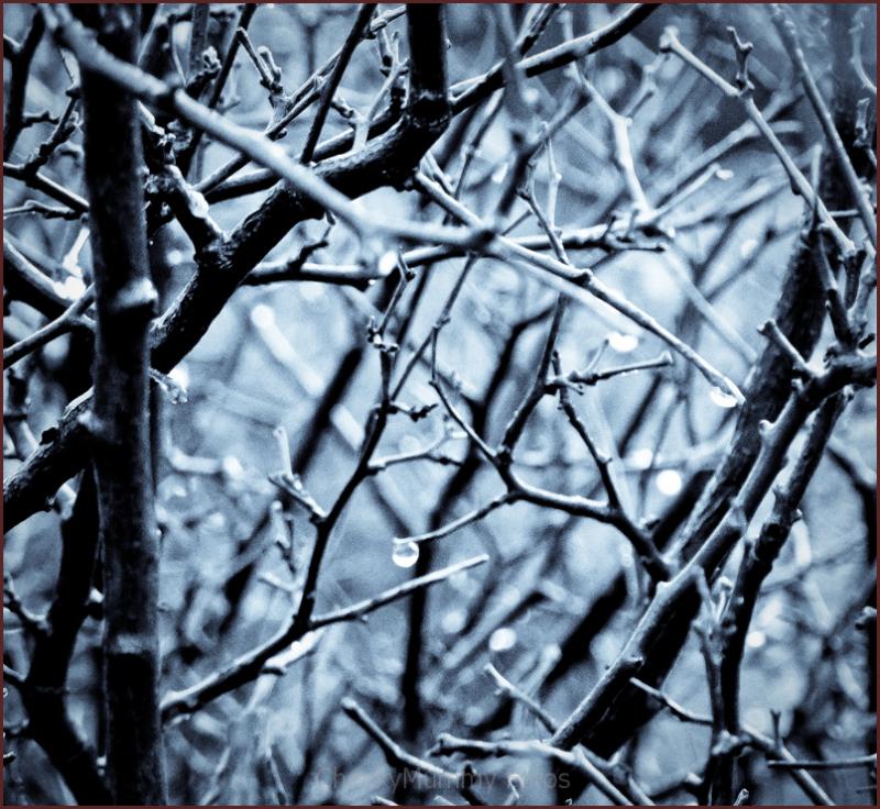 Winter dewdrops