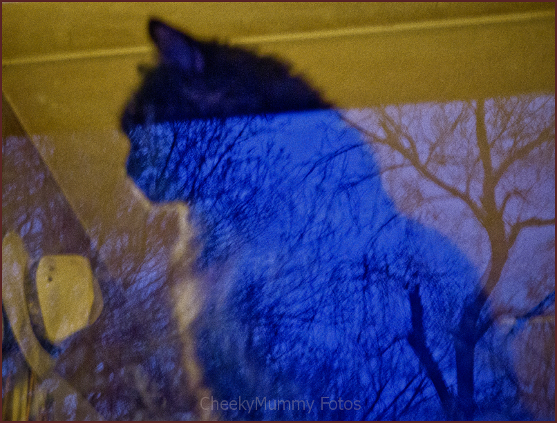 Cat in window with reflection