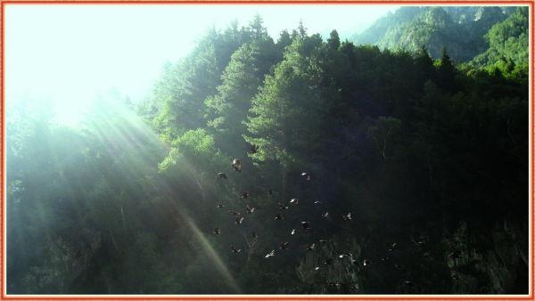 Captured on way up to Soonamarq, Kashmir.