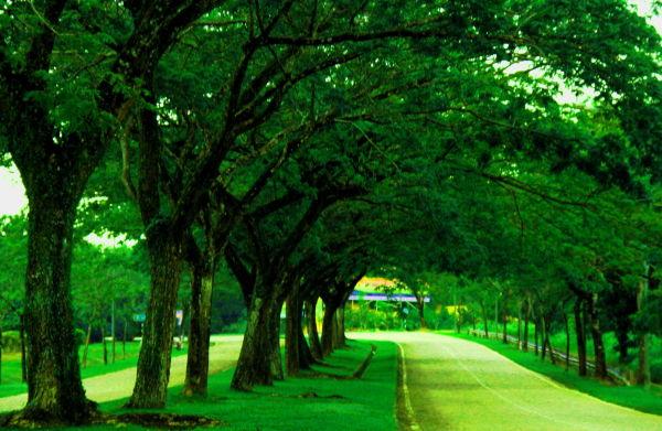 Trees along road.