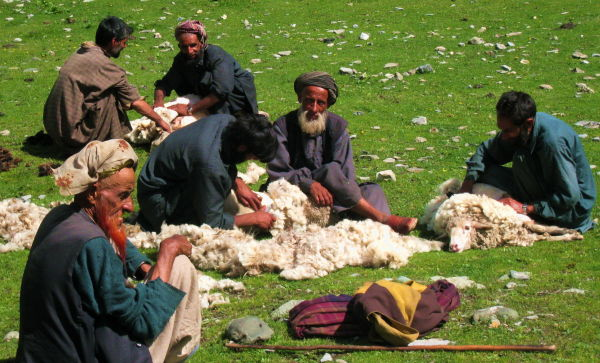 Sheeps' fur!