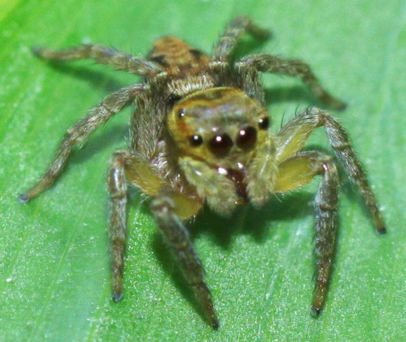Gold spider!