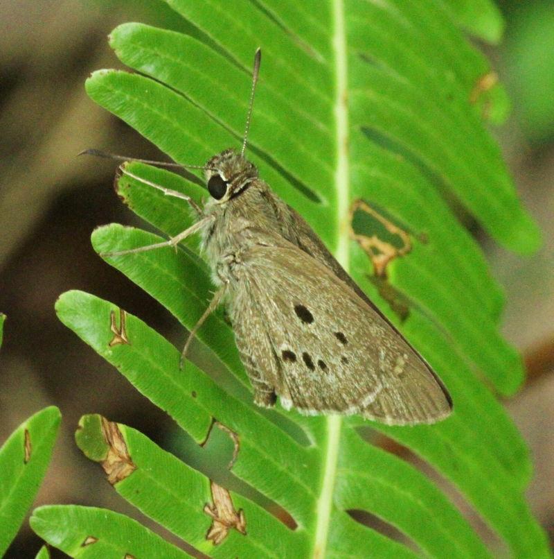 Pale butterfly!