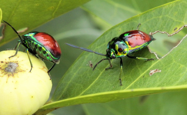 Colourful bugs!