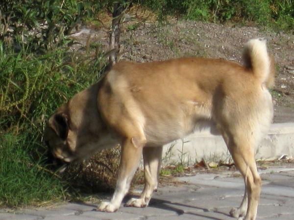 perro callejero 2