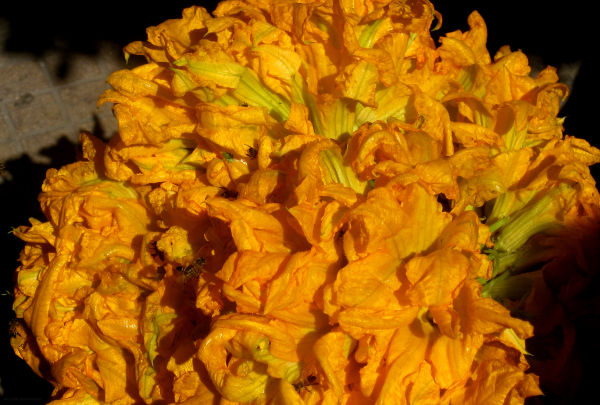 Flores de Calabaza - jlg