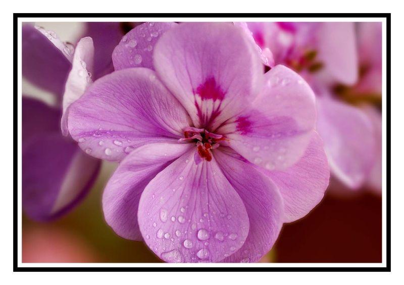 Some petals....