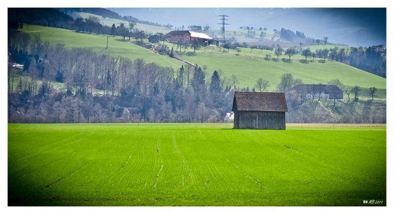 grünes Feld mit Stadel