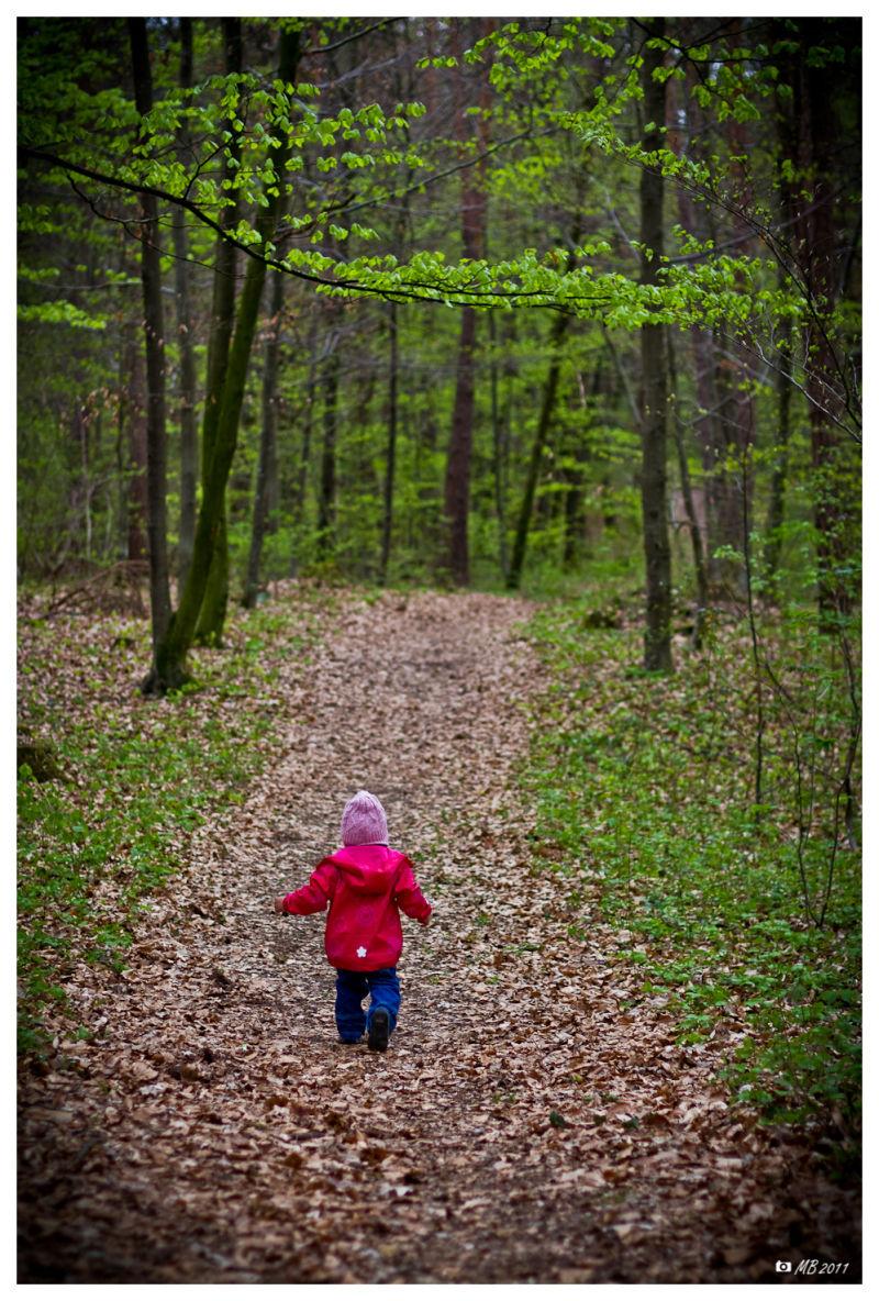 Sparziergnag im Wald in Neuzeug Steyr Land
