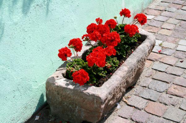 L'Alsace en fleur