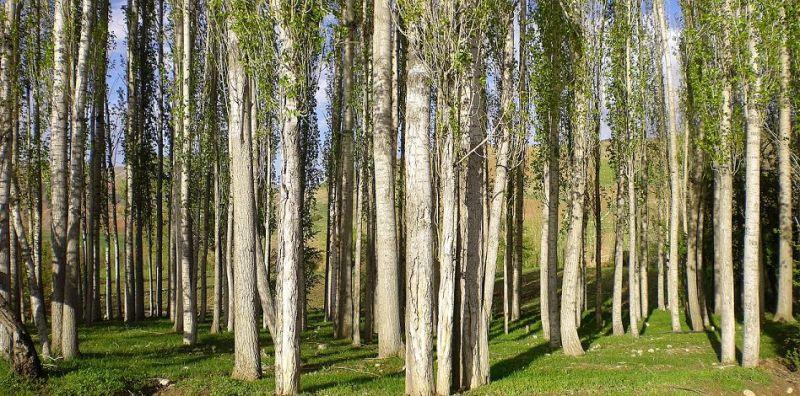 Tree Spydal