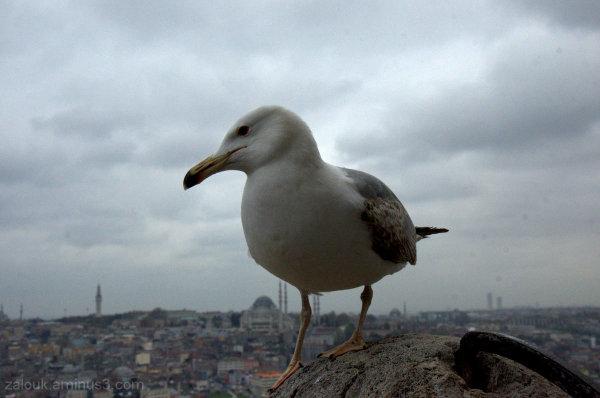 Istanbul, Greece