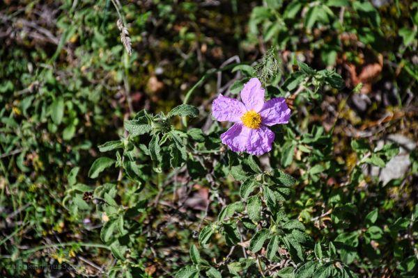 Spring flowers II