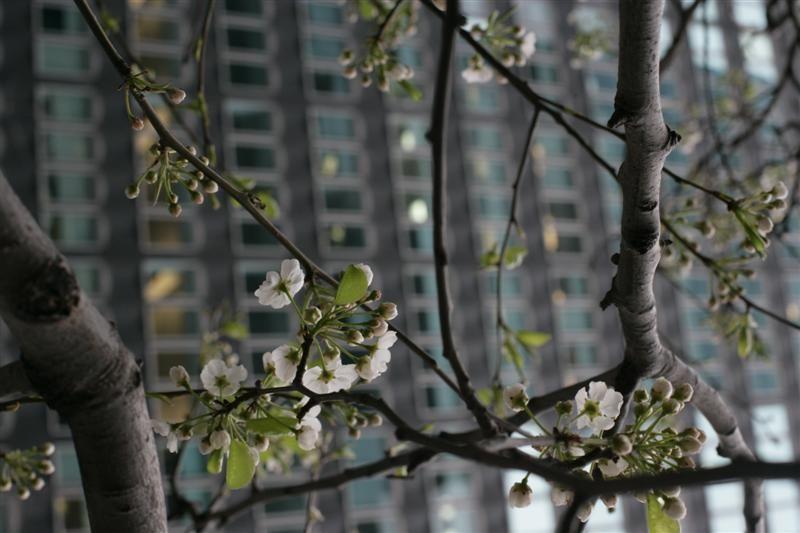 Perhaps Spring