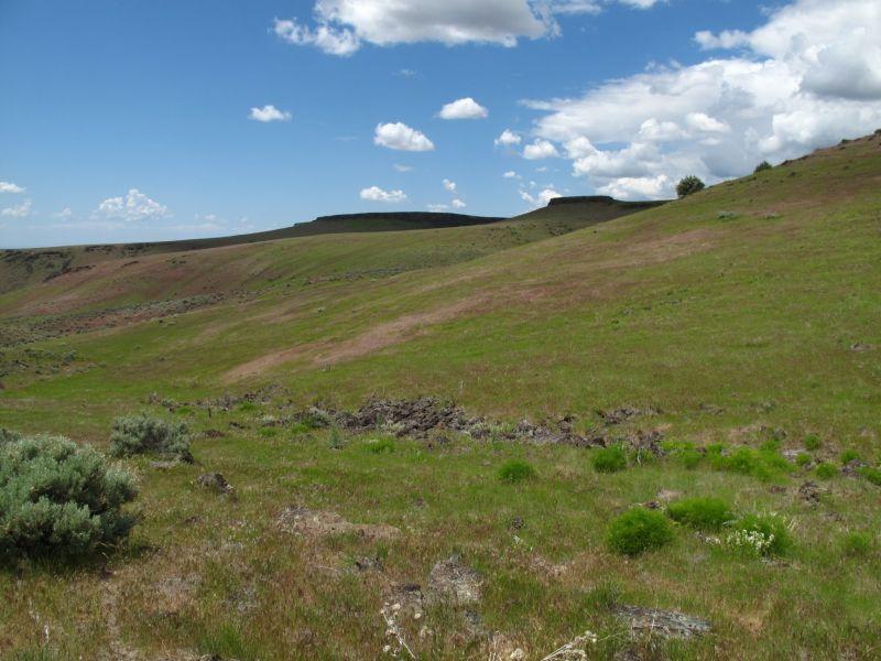 spring green grass with basalt cliffs