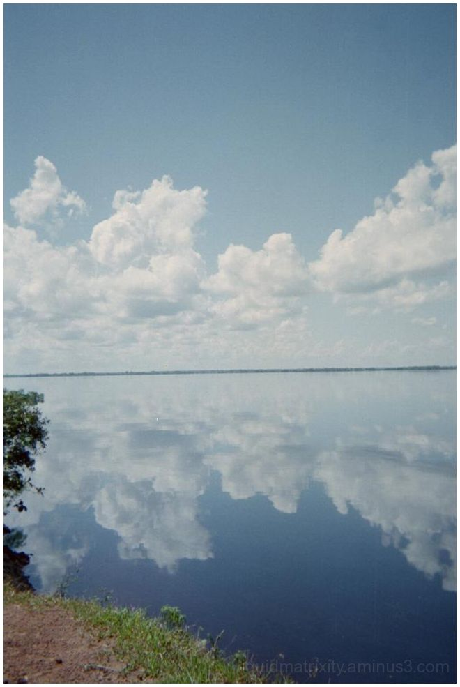 Mirror image on the Amazon River