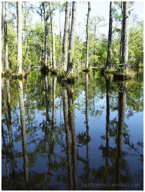 Cypress Swamp  Mirror kimage
