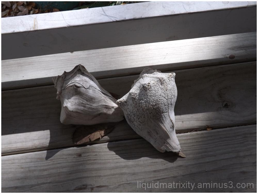 Shells sunning