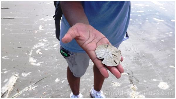 Sand Dollar on the Beach
