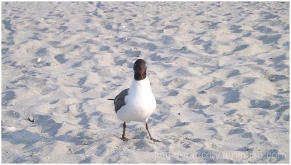 Gull Study 3