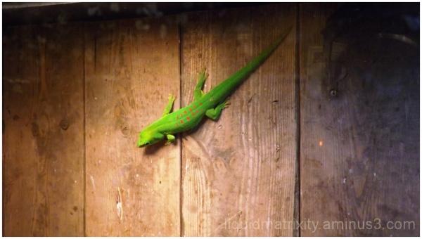 Pretty in Green