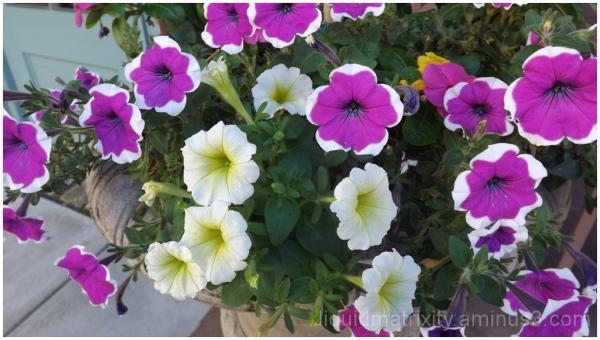 Flowers in Residence
