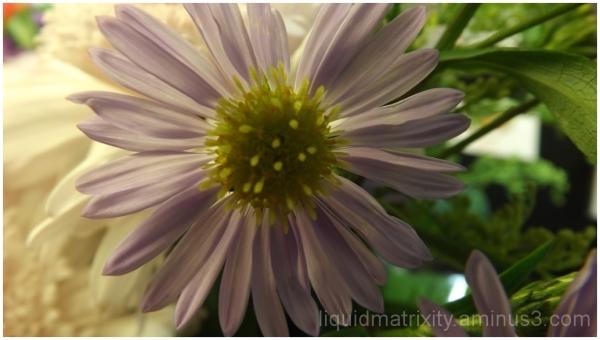 Gently Flower