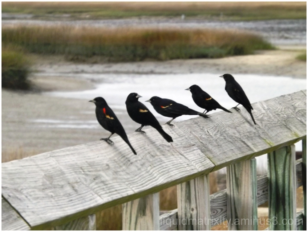 Row Birds