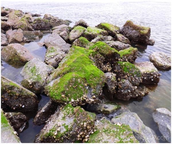 Moss and Rocks