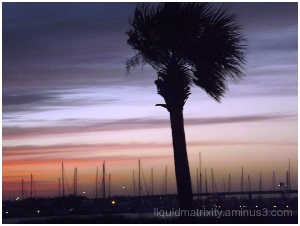 Palmetto in the Gloaming