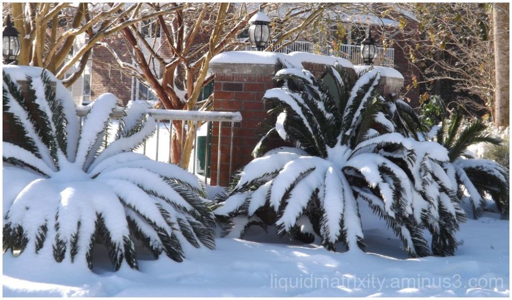 Snowy Foliage