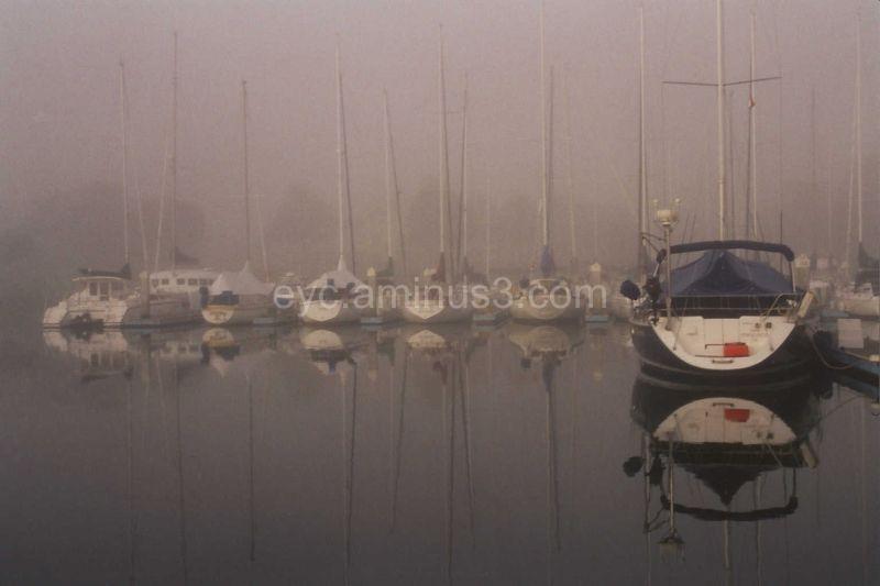 Foggy Morning -David Dury