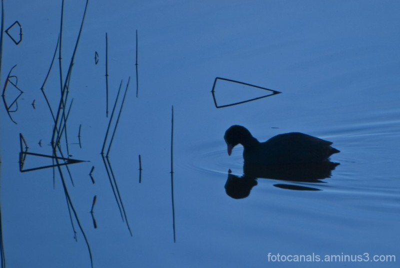 matinada als aiguamolls de l'Empordà