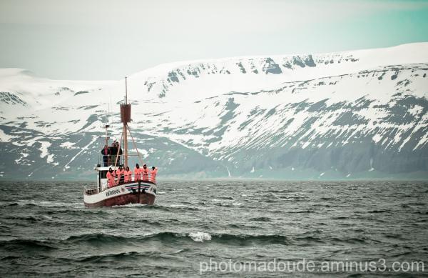 Husavik, Islande, bateau, Fjords