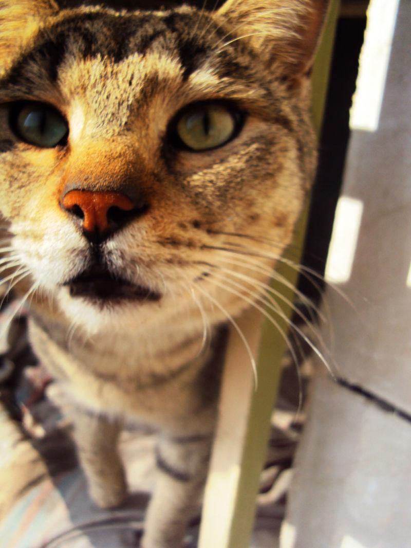 My olden cat: Mouchool