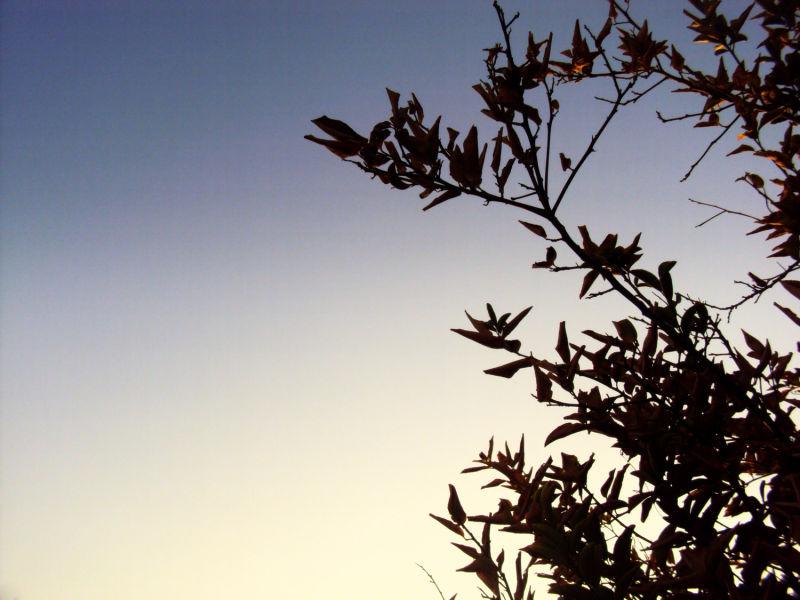 Before sunset