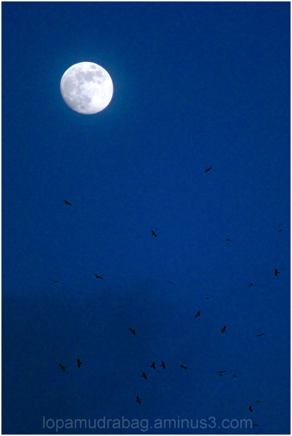 The Moon and the birds
