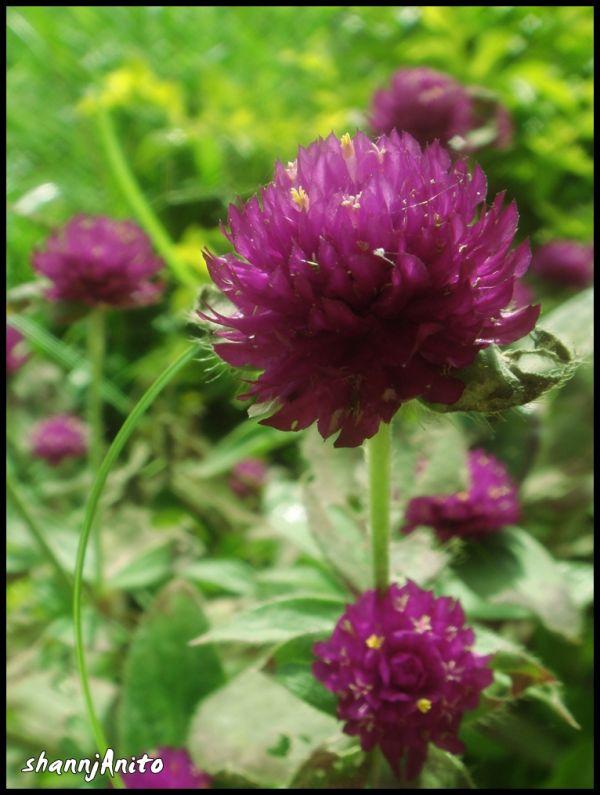 Violet amongst green