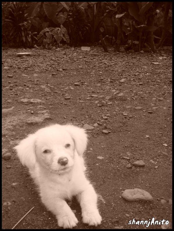 My precious puppy