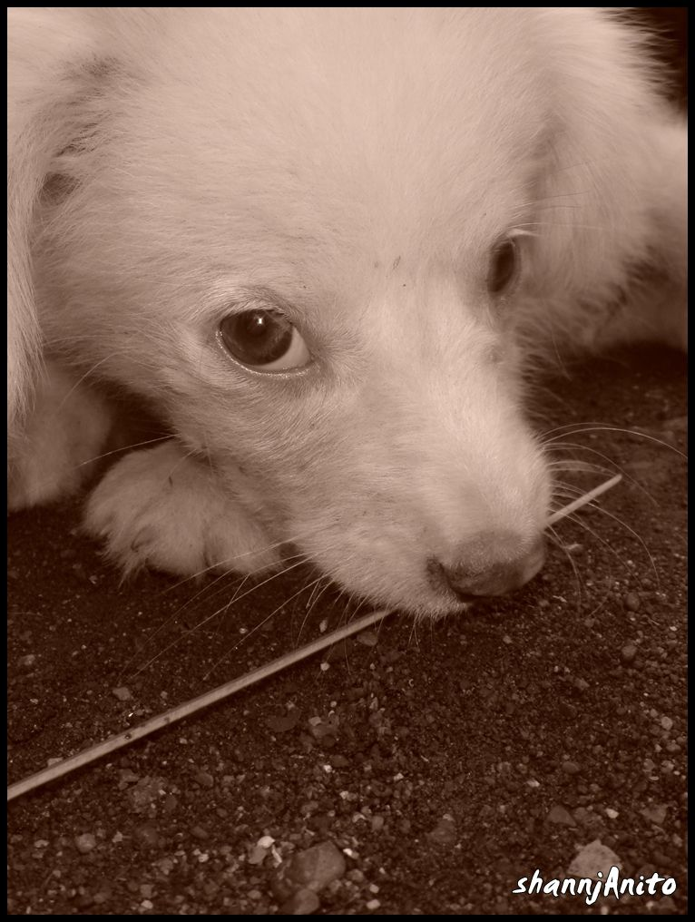Another puppy pose in sepia mode