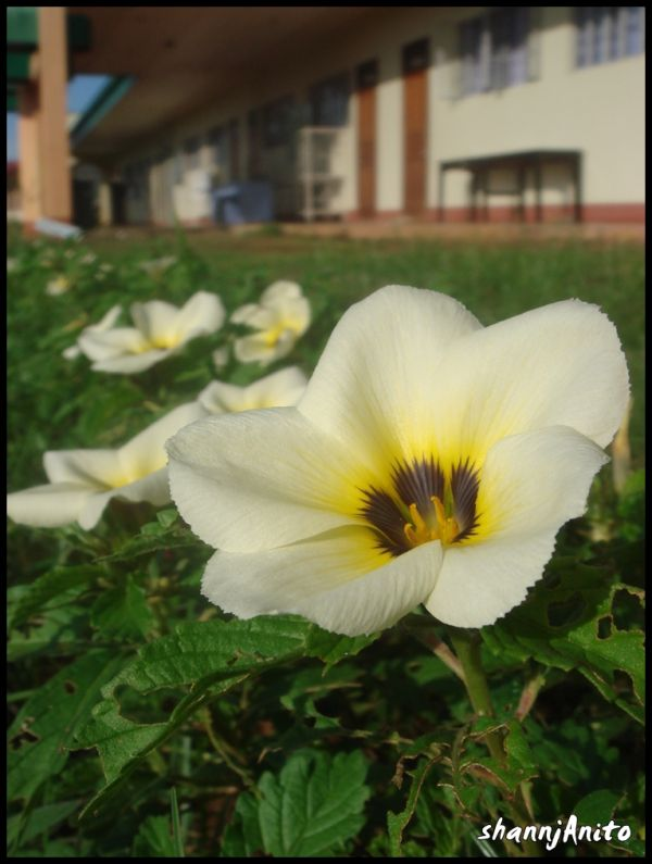 I know this flower