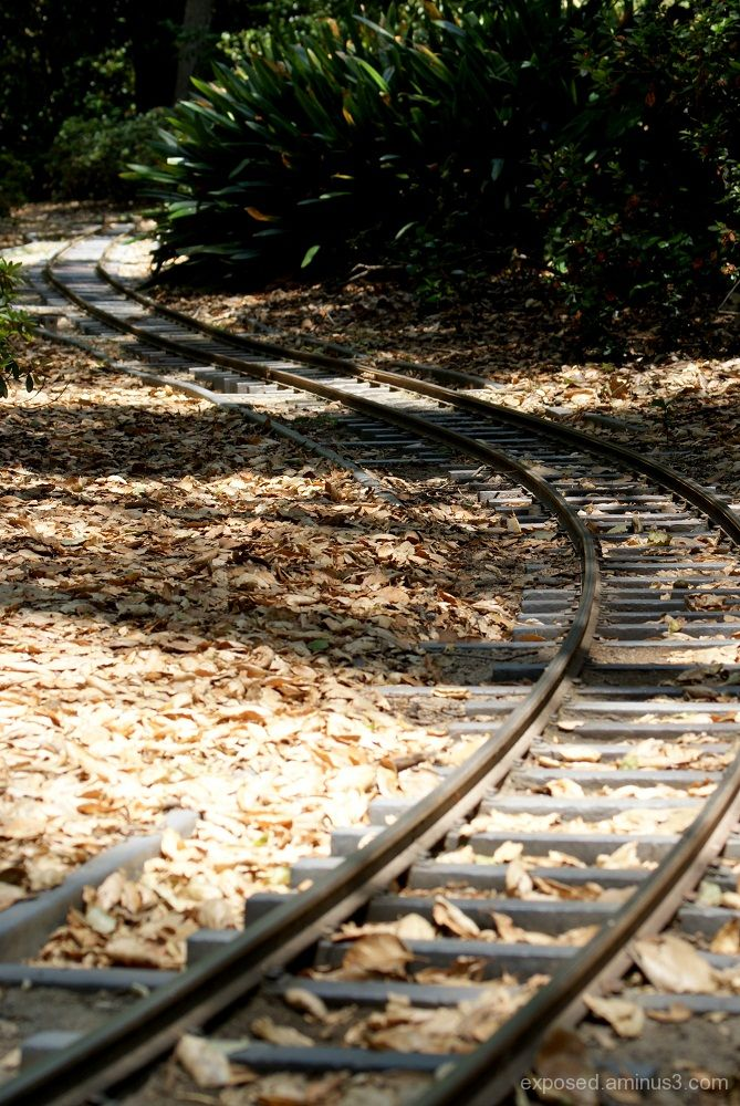tracks that lead