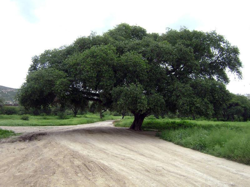 Camino a La Cantera