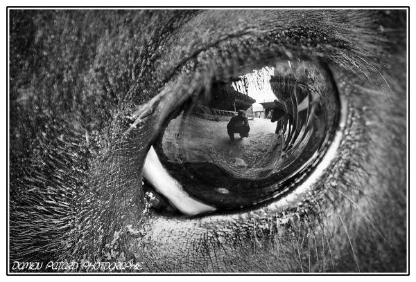 oeil bête vache cyclone eye beast reflet miroir