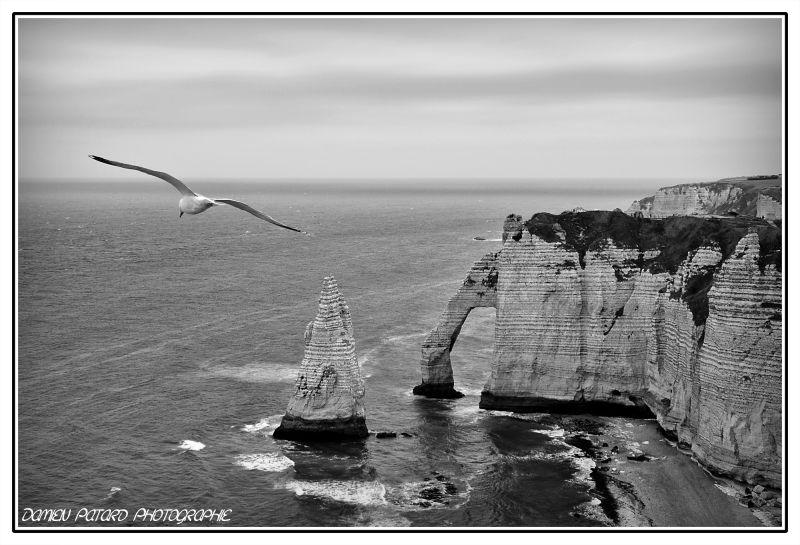goéland argenté Etretat pic aiguille vol mer