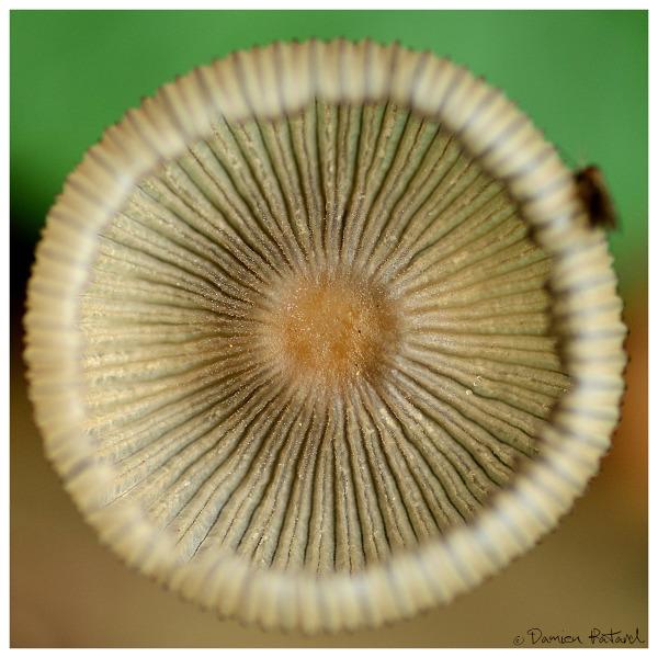 Forêt Montgeon Havre Automne couleurs champignon