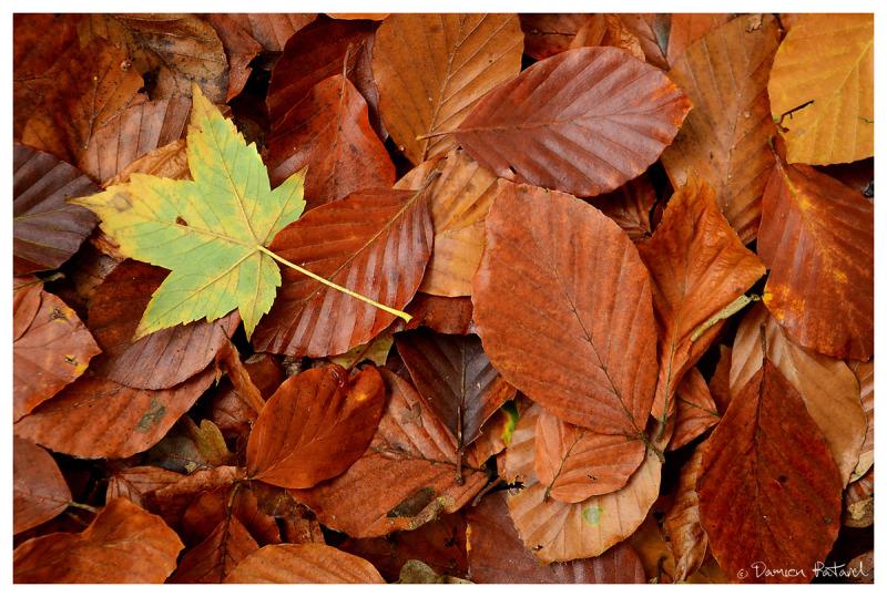 Forêt Montgeon Havre Automne couleurs feuilles