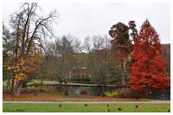 Parc Rouelles Havre Automne couleurs lacs oies