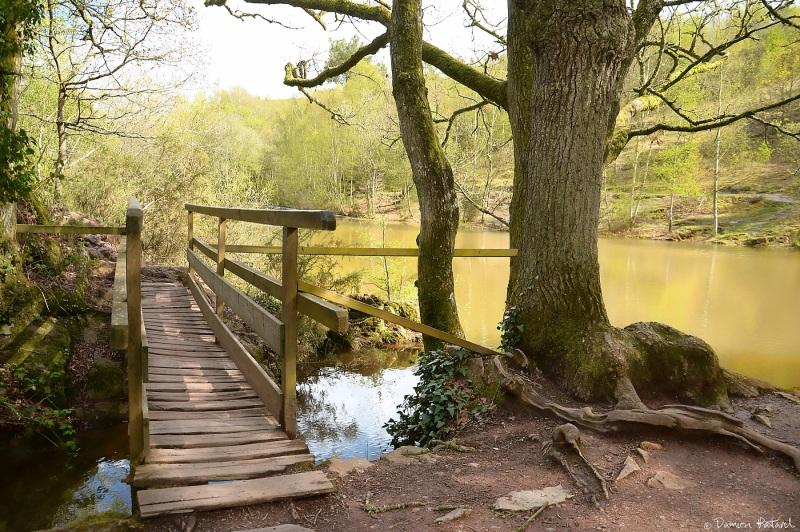 le petit pont de bois landscape rural photos damien patard photographie. Black Bedroom Furniture Sets. Home Design Ideas